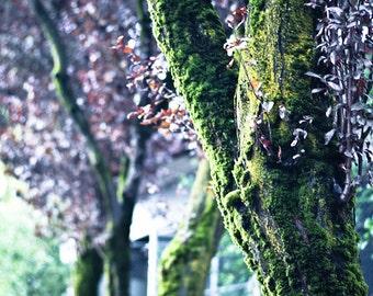 Lovely Mossy Tree in Portland, Oregon