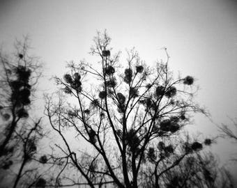 "Art Print ""Winter Trees II"" Wall Art Analog Photography Landscape Photography Dark Art"