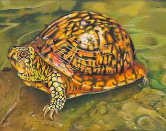 Box Turtle (Colored Pencil)