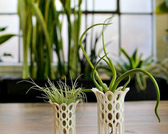 """Unique Breathing Air Plant Holders Air Plant Containers """"Queen"""" Style"""