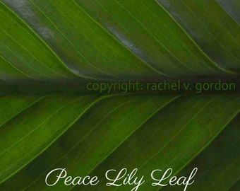 "Peace Lily Leaf Macro 8"" x 10"" (digital download)"