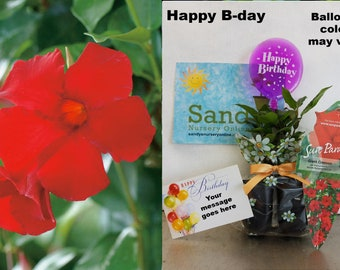 "Sandys Nursery Online® All Included GIFT Package ""Giant Crimson"" 2 pack"