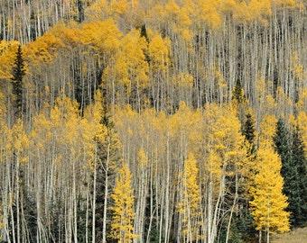 Nature photography, mountain art, Colorado photography, aspen trees, home decor, wall art, nature print, landscape - Aspen Patterns