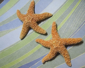 Mini Orange Sugar Starfish - Mini Starfish - Orange Sea Stars - Sugar Stars
