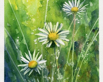 Camomile watercolor painting