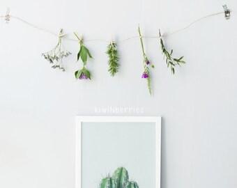 Botanical wall art - Cactus art print - Cactus wall art  - Minimalist cactus - Cactus photography - Cacti wall art - Cacti art prints