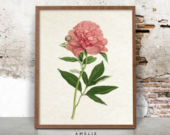 Botanical Flower Print, Pink Wall Art, Vintage Illustration, Shabby Cottage Chic Home Decor, Printable Digital Download, French Country Art