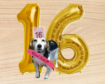 Donation for my dog's Sweet16Party for my dog with cancer pets