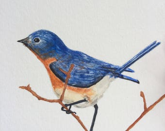 Framed Bluebird Original Watercolor Painting