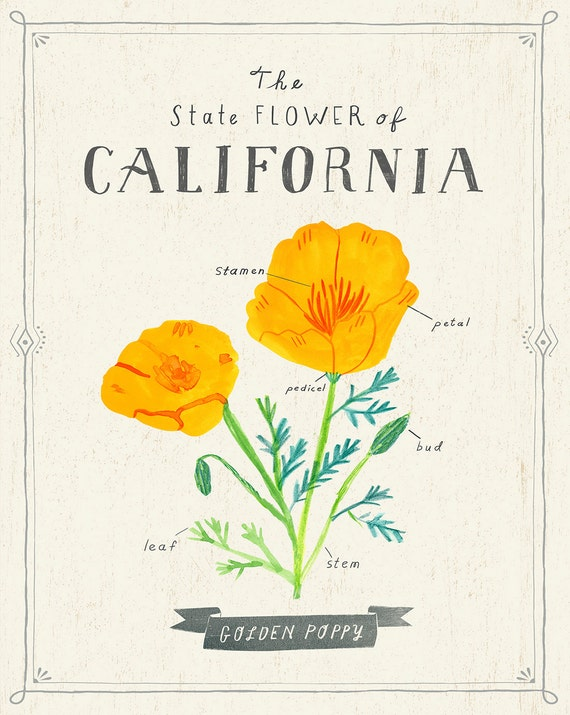 California state flower print the golden poppy like this item mightylinksfo Gallery