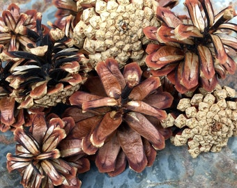 Real Pine Cones, Photo Prop, Wyoming Pine Cones, Rustic Wedding Decor, Botanical Embellishment, Natural Decor, Nature Inspired Crafts