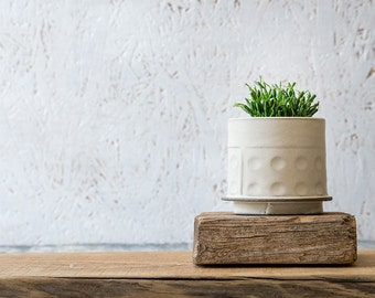 White Ceramic planter, Small Ceramic Planter, Succulent planter, Air plant holder, Modern textured planter, Indoor Planter, Gardening Gift