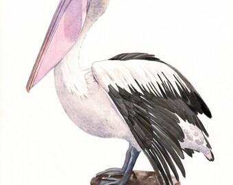 Pelican Painting  -P072- print of watercolor painting - A3 largest print wall art print - bird art print