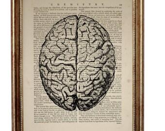 Anatomy Art, Anatomy Gift, Anatomy Print, Anatomy Poster, Human Brain Artwork, Medical Student Gift Dictionary Art