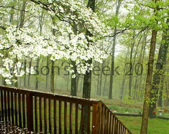 Foggy Morning Dogwood Petals