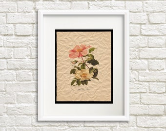 Crumpled Cherokee Rose - Flower Artwork for Home, Floral Art Print, French Country Style, Cottage Chic Style Room Decor