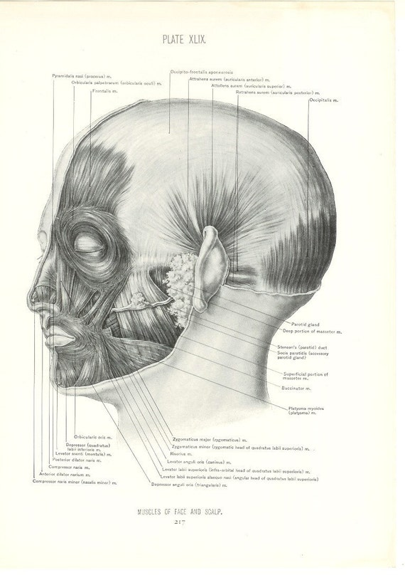 1926 Human Anatomy Print Muscles Of Face And Scalp Vintage