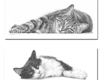 Cat Drawings, Cat Greetings Cards, Cat art, cat lovers gift