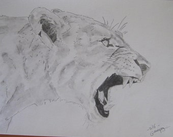 "dessin animalier ""lionne""crayon graphite"
