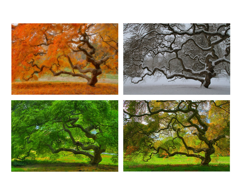 🔎zoom - Four Seasons Wall Art Japanese Maple Tree 6X9 Print Set