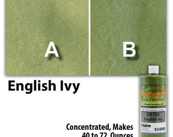 Water Based Conentrated Concrete Stain 8oz Bottle - English Ivy