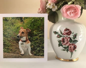 Funny jack russell terrier dog photo greetings card