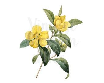 Botanicals Digital Download Flower Clip Art for Invitations, scrapbook, Card making, collage, prints - 1270