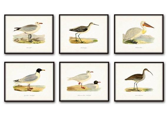 title | Coastal Birds And Flowers Wall Decor