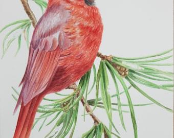 Original Watercolor Red Cardinal
