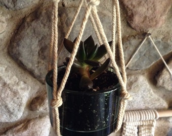 Small Glass & Macrame LIVE PLANT, succulent, home decor, hanging, house plant