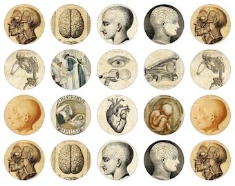 "Anatomical Magnets, Victorian Anatomy Pins, Medical Drawing Magnets, Medical Pins, 1"" Flat, Hollow Bk., Cabochons, 12 ct"