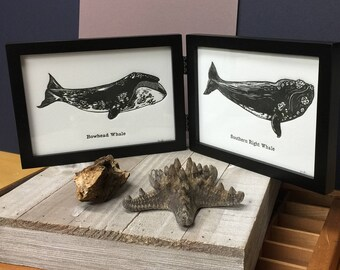 SET of BOTH Whale Letterpress Prints