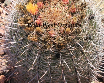 Wild West Organics Fish Hook Barrel Cactus Seeds
