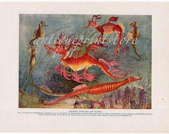 1912 extremely rare sea dragon seahorse original antique ocean print color lithograph