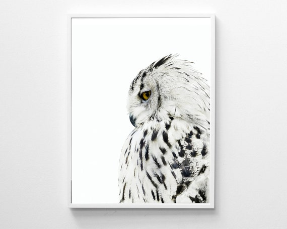 Owl print black and white modern art print animal print
