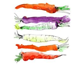 "Rainbow Carrots Watercolor & Ink Drawing Vegetable Garden by Olga Tenyakova / Fine Art Print 8.5"" x 11"""