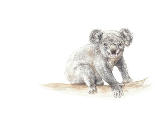 Koala Watercolor Limited Edition Print 8.5x11 Signed