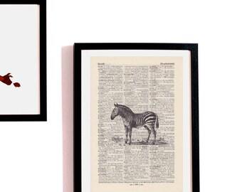 Print ZEBRA - antique book page - portrait