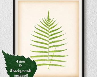 Printable art, Fern print, Vintage fern illustration, Instant download 8x10, 11x14, A3, A4 fern print, Botanical art, Antique print, #98