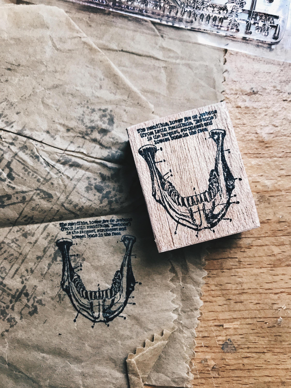 Wood Mounted Rubber Stamp Jawbone Anatomy Series
