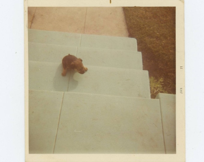 "Vintage Snapshot Photo: Puppy ""Santana"" 1971 (74564)"