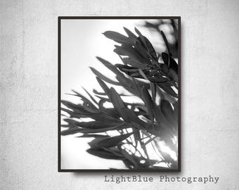 Nature Leaves photography Black and White Minimal photography Olive tree Photo print Greece print Minimal Romantic art print Grey Wall decor