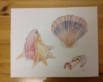 "Original Watercolour Painting SEASHELLS, Wall Art, Wall Decor, Bathroom, Shells, Shell painting, Home decor, 10""x 8"", Watercolour Seashells"