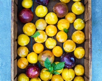 Food Photography Summer Plums Photograph Fruit Food Photo Kitchen Art Red Yellow Plums Cooking Market kit2