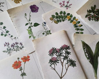 Old bookpages with floral illustrations