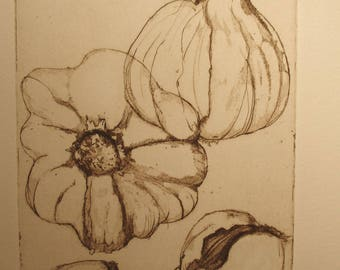 Original fine Art Etching Anatomy of a garlic