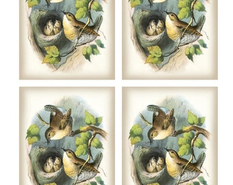 Vintage Pair WRENS feeding 5 CHICKS in NEST - Framed Image Sheet - Digital Instant Download - nature ephemera collage supply