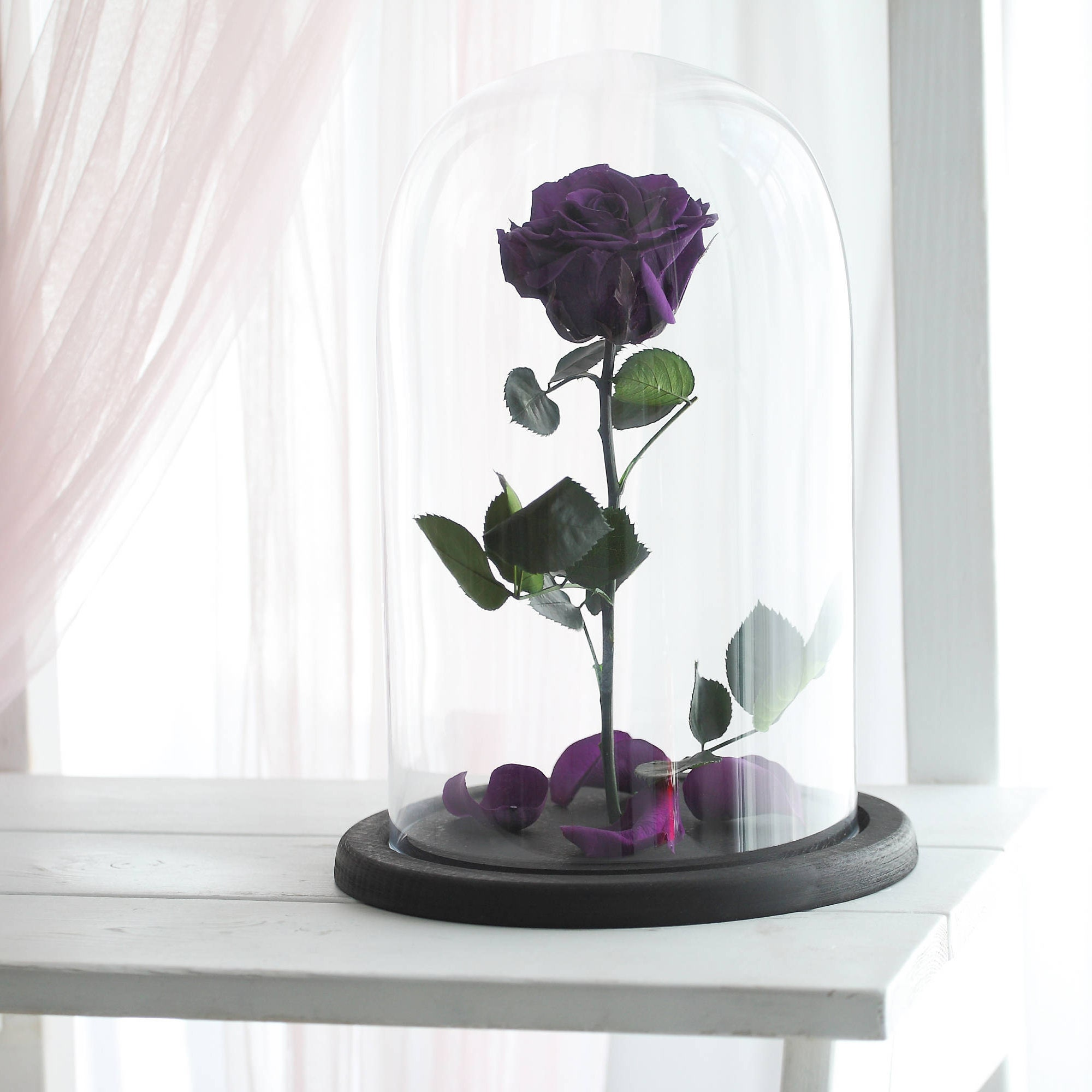 Beauty and the beast rose Large Belle Rose forever purple
