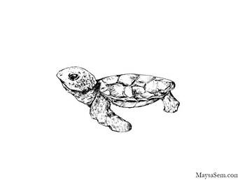 Baby Turtle - Art Print