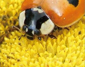 Magnetic bookmarks (Ladybug)